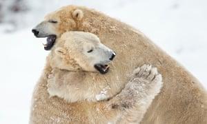 Scottish Polar Bears