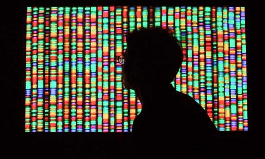A visitor views a digital representation of the human genome August 15, 2001 at the American Museum of Natural History in New York City.