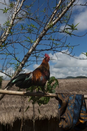 After Xeng Thor hit a cluster bomb in the field where him and his brother were looking for medicinal herbs, his family received a small compensation, for the loss of their younger son, that allowed them to buy a hunting rooster.