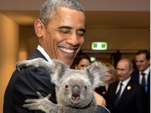 President Obama meets a koala ahead of the G20 summit in Brisbane.