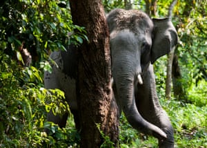 Elephant in Kazinranga park, Kaziranga National Park