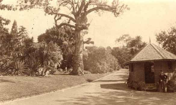 separation tree