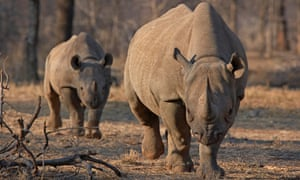 Technologies like CyberTracker are creating new opportunities for community participation in science and conservation, helping the plight of endangered species like the black rhino.