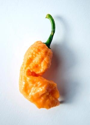 Peach Ghost Scorpion: 750,000+ Scoville heat units