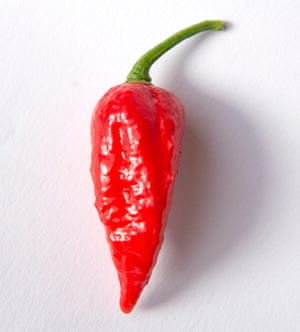 Scoville scale: The hottest chillies in the world– in