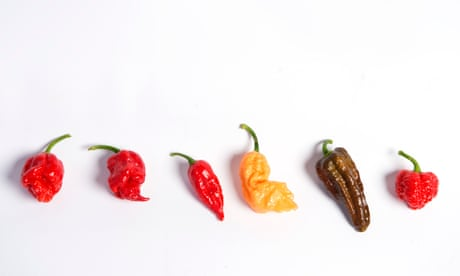Man eats world's hottest chilli pepper – and ends up in