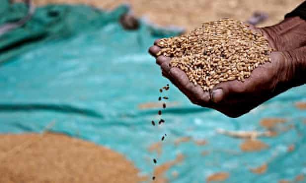 Grain Africa