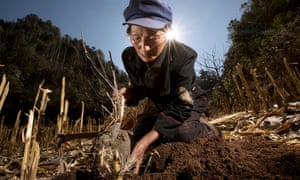 Tree planting China