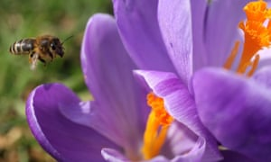 Climate change will bring forward spring by three weeks, a study predicts.