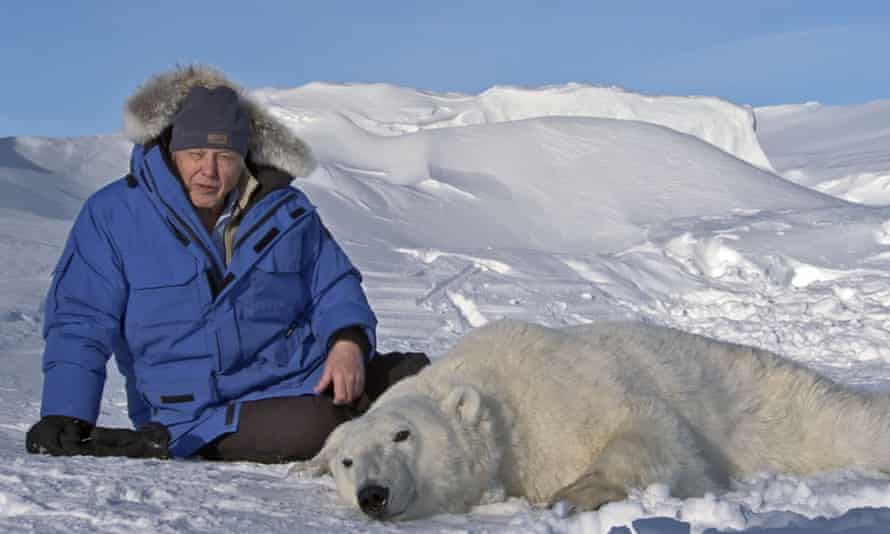 Sir David Attenborough with a tranquillised polar bear in Frozen Planet