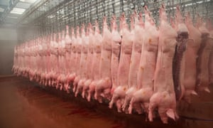 Pig carcasses hanging in an abattoir in Yorkshire, England. Demand for meat, which is rising globally, is a significant driver of deforestation, habitat destruction and climate change.