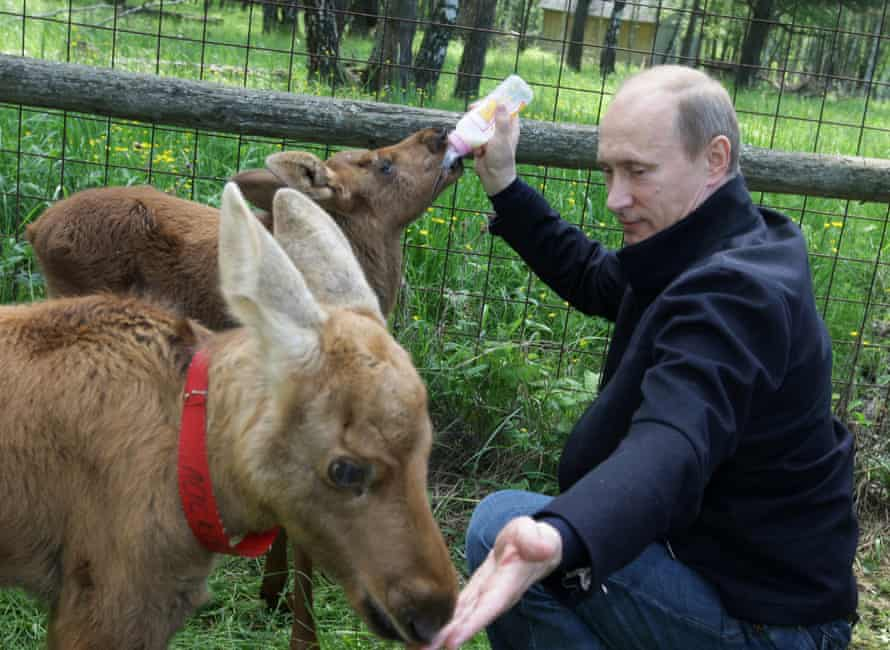 Putin feeding elks at a national park in Moscow, June 2010.
