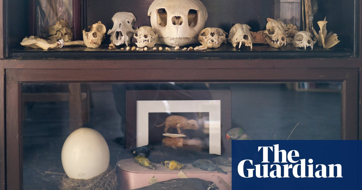 Death becomes it: how the Morbid Anatomy Museum slayed Brooklyn ...