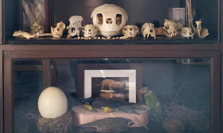 The Morbid Anatomy Museum in Gowanus, Brooklyn.