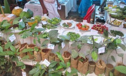 Seedfest in India