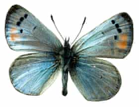 A butterfly - said to be the spirit of Reg – occasionally appears at Theatre Royal, Bath.