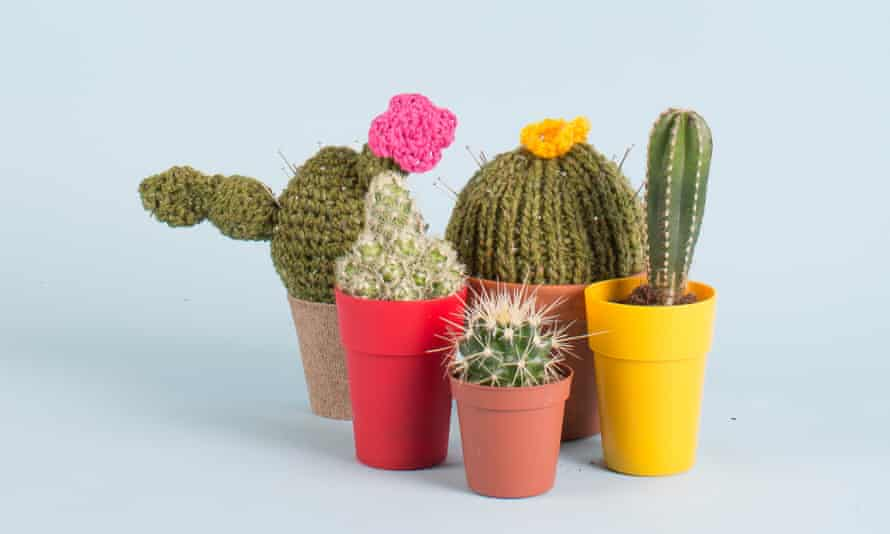 Ouch! ... knitted cacti are all the rage.