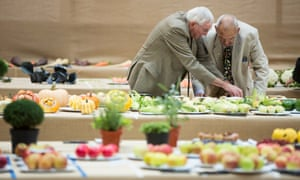 Bob Herbert and Malcolm Evans judge entries in the singles category at the RHS harvest festival show.