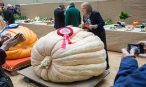Ian Paton's pumpkin takes the prize at the Royal Horticultural Society's harvest festival show