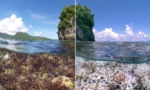 A before and after image of bleaching in American Samoa