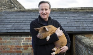 David Cameron holds Florence the piglet