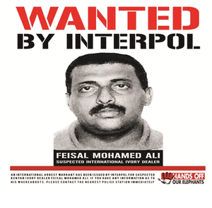 Newspaper advert placed by WildlifeDirect in Kenyan dailies following an announcement by Interpol that Feisal Mohamed Ali was on its 'most wanted' list for wildlife crimes.