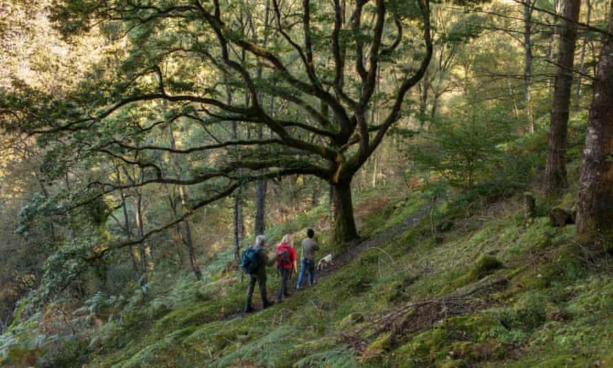 Water, water everywhere ... Llennyrch Celtic Rainforest.