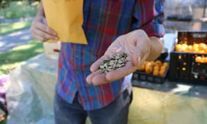 Nathan Kleinman, who founded the Experimental Farm Network, holds watermelon seeds from Homs, Syria. Credit: Robin Shulman