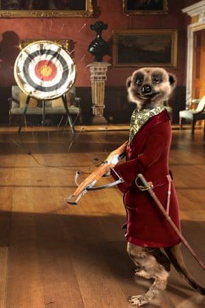 Aleksander the meerkat.