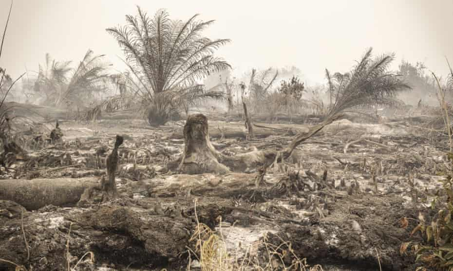 Fires in a palm oil concession in Central Kalimantan, Indonesia