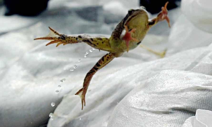 Frog-jumping-008.jpg