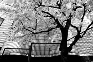 Tokyo blur #10, 2013