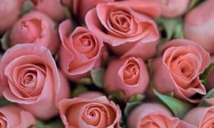 Tim Lott roses