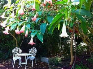 Wendy Whiteley's Secret Garden in Lavender Bay, Sydney