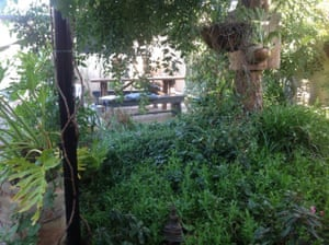 Courtyard with Chinese elm providing shade