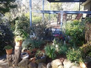 My lovely front garden