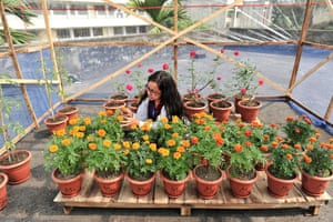 A researcher at the Bangladesh University of Engineering and Technology (BUET) checks trials of plants grown with compost pellets made from treated toilet waste.