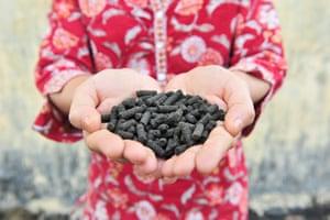 A handful of freshly made pellets of organic fertiliser.