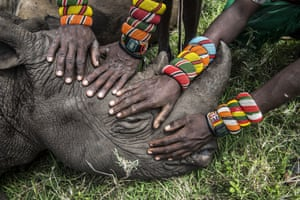 Orphaned Rhino by Ami Vitale won the second prize in the nature singles category. National Geographic shows a group of young Samburu warriors encountering a rhino for the first time in their lives in Northern Kenya.