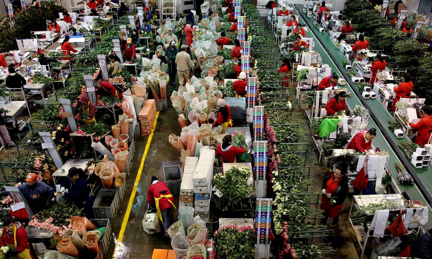 Female workers cutting flowers in a factory