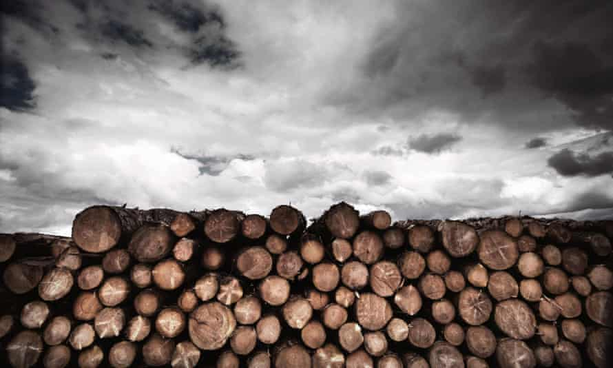 Log pile and clouds