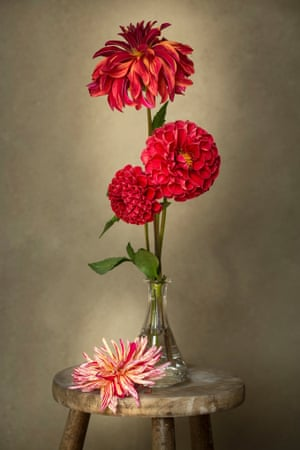 Vase with Dahlias by Sibylle Pietrek, second place in the Beauty of Plants category