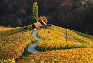 Vineyards, by Albert Ceolan. Winner of the Bountiful Earth category