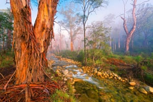 Mark Gray's Mystic Forest, 1st place in the Trees, Woods and Forests category