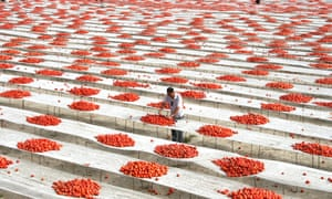 A farmer puts harvested tomatoes for air drying in Xinjiang.