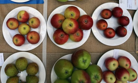 Non-GM apples. A Canadian company's two genetically modified varieties have been approved by US regulators.