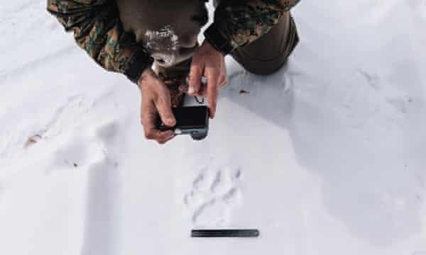 A tiger cub's print.