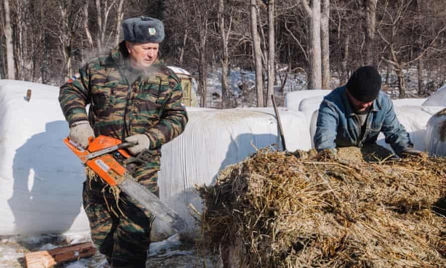 Gamekeeper Anatoly Andreyev prepares food for animal feeding grounds.