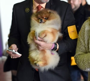 A Pomeranian with its handler