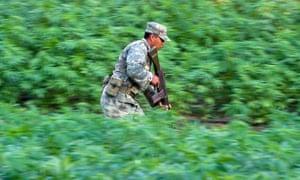 A Mexican soldier runs in a marijuana field in Culiacán, Sinaloa state.